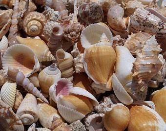 1 KILO Bag Bulk Seashells, Wholesale Seashells, Mixed Seashells, Wedding Shells, Wholesale Craft Shells, Craft Seashells Bulk