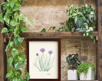 Digital Download Botanical Chive Herb Illustration