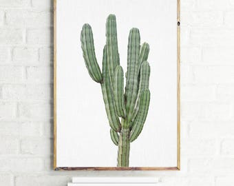 Cactus print, modern cactus printable poster, digital download cactus wall art, isolated cactus wall decor, green cactus photography