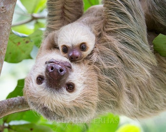 Baby Animal Nursery Decor, Sweet Mom and Baby Sloth Photo, Nursery Art Print, Mom and Baby Animal Photograph, Safari Baby Nursery, Wildlife