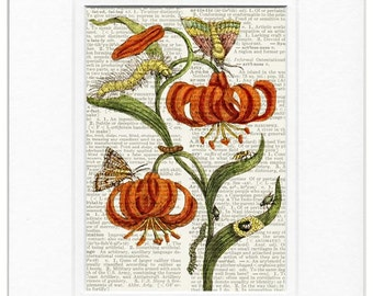 Botanical VI 1600's print