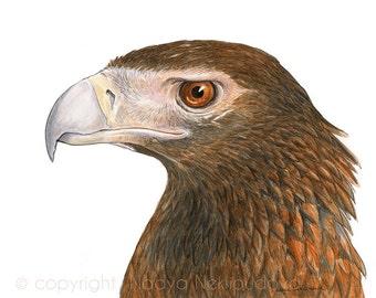Wedge-Tailed Eagle - 8x10 inches (20x25cm) Australian Bird Art Print - giclee reproduction, nature decor, bird of prey art