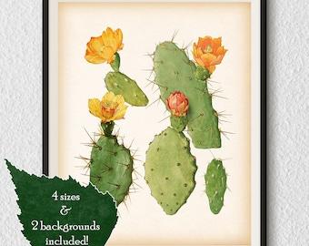 Vintage cactus illustration, Cactus art, Antique cactus print, Printable art, Cactus wall art, Art print download, Botanical art, #79