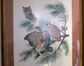 Vintage Framed Print, Little Screech Owl