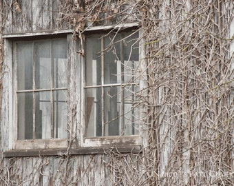 Monochromatic Wall Art ~ Rustic Home Decor ~ Gray Minimalist Art ~ Vines on Old Building ~ Weathered Wood Photography ~ Neutral Large Art
