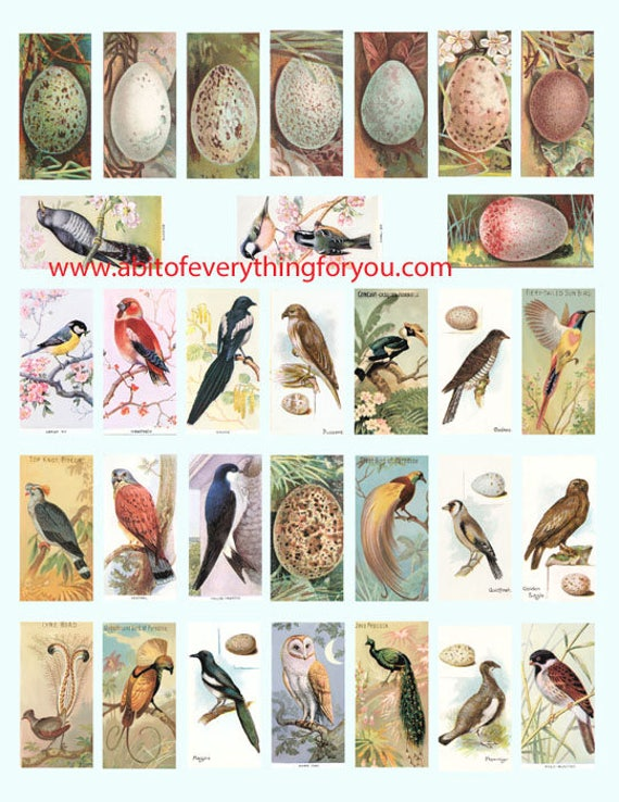 "vintage birds bird eggs clip art digital download domino collage sheet 1"" x 2"" inch graphics images printables for pendants pins magnets"