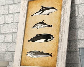 Whales - 11x14 Unframed Art Print - Great Gift for Nature Lovers and Beach House Decor
