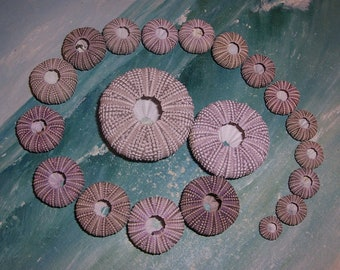 Lot/20 large & small Florida Gulf BEACH Collected PURPLE, Lavender Sea URCHIN Tests