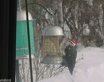 Stainless Steel Suet Feeder
