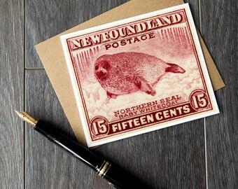 baby seal card, baby seal art prints, newfoundland birthday cards, newfoundland christmas cards, newfoundland canada, baby seal birthday art