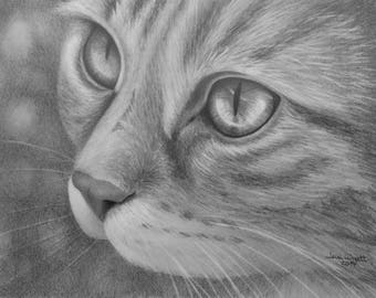 "Cat Eyes 2 - Graphite Pencil Drawing - 5"" x 7"" Sketch"