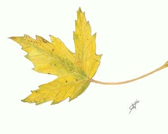 "Autumn Maple Leaf Print   5"" x 7"""