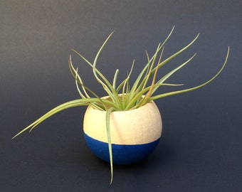 Air Plant Pod - blue bottom