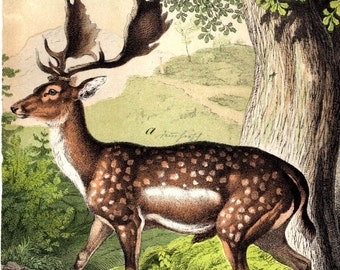 Custom Matted 1877 Deer Stag Buck Antique Deer Print Custom Matted Hunting