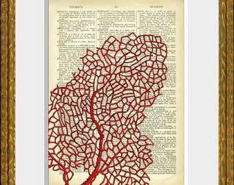 SEA CORAL 02 recycled dictionary print - antique dictionary page with a retooled sea life illustration - upcycled vintage charm - wall art
