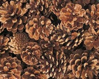 Preserved Austriaca Pine Cones, Simply Beautiful  A MUST HAVE!!!!