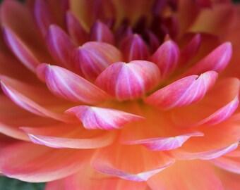Sunset Dahlia Fine Art Photo