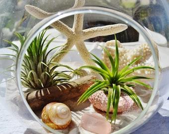 """Beach Terrarium Kit ~ 7"""" Air Plant Terrarium Kit ~ Coastal Living Beach House Decor ~ Real White Coral ~ Sand and Shells ~ Driftwood ~ Gift"""