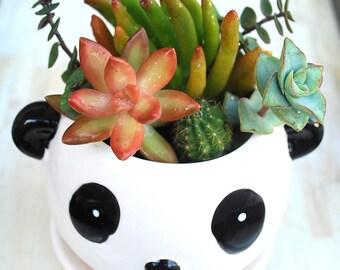 Cute Panda Bear with Live Succulents