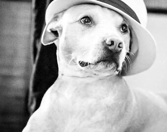 "Dog Art, Pet Portrait, Black and White Photography, Animal Photography, Dog with Hat, Pit Bull Print, Animal Art, Dog Gift,  ""Ella"""