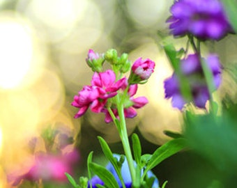 Whimsical Garden at Sunset - Flower Photo Print - Size 8x10, 5x7, or 4x6