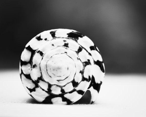 Black and white photography seashell sea shell print beach photo coastal wall art grey gray modern 11x14 8x10 photograph marbled cone