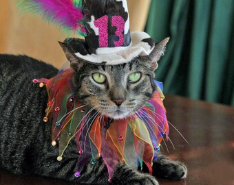 Cat Birthday Hat ll Cat Party Collar ll Cat Birthday Party Outfit for pets with a 10 to 12 inch collar