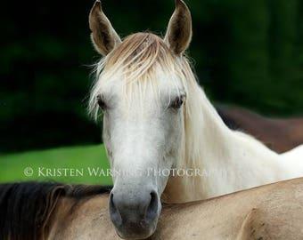 Horse Friends, Horse Photos, Horses, Equine Art, Lean on Me, Rocky Mountain Horse