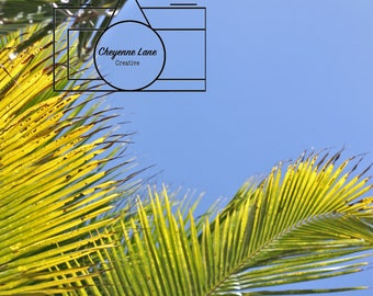 Stock Photography: Palm Trees and Sky