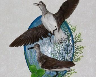 Pair Of Birds - Taxidermy Bird Mount, Stuffed Bird For Sale - ST3934