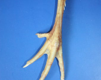 Foot talisman - Protection amulet - Spellcraft Chicken Foot Talisman - Decor - Lucky Chicken Foot- Foot talisman- Natural Chicken Foot Charm