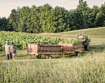 A Carolina Harvest : archival fine art photograph - farming landscape - rag & matte papers