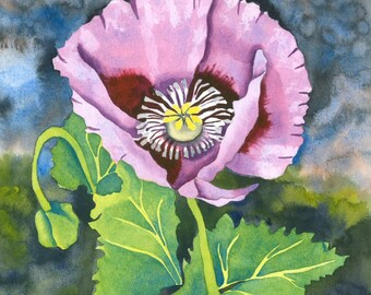 Limited Edition Signed Print, Lilac Poppy in Botanical Style Watercolour