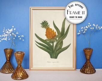 "Vintage illustration of Pineapple - framed fine art print, botanical art, 8""x10"" ; 11""x14"", FREE SHIPPING - 33"