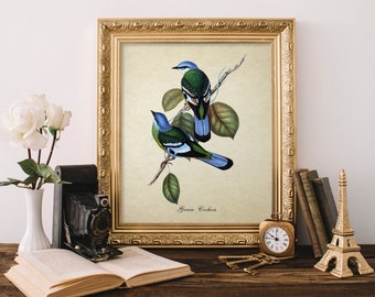 Vintage Botanical Bird Print, Green Cochoa Print, Vintage Natural History Print, Blue Bird Art Print, Decorative Bird Art Reproduction B020