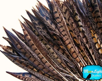 """Tail feathers , 10 Pieces - 6-8"""" NATURAL Lady Amherst Pheasant Tail Feathers : 2227"""