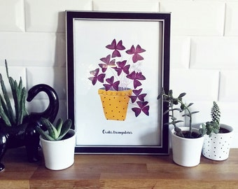 pRINT - Oxalis Triangularis-