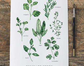 Culinary Herbs A3 Print