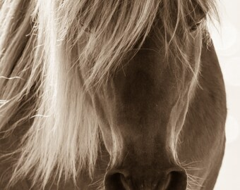 """Wild Horse photograph. Horse print,Wild Horses, Mustangs, Horse Photography """"Soft"""""""