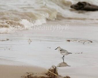 Shore bird on beach, shore bird print, Lake Huron, sandpiper, beach photography, bird photo, shorebird print, nature, wall art, fine art