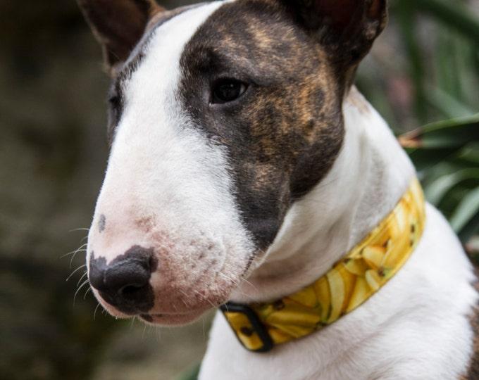 Collier pour chien - Bananes