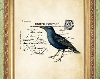 Bird Art Prints French Postcard Bird Print