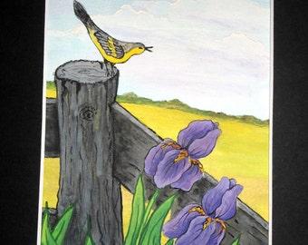 Watercolor painting, bird,purple irises,spring painting, hand-painted,pasture scene,birds & blooms,8 X 10 matted,Black matt,