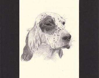 English Setter Vintage Dog Print C.Francis Wardle 1935 Drawing Mounted with Mat English Setter Print English Setter Dog