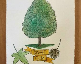 Original Sweet Gum Illustration