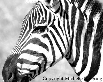 Zebra Profile - Digital Photography - Zebra Art, Zebra Photography, Zebra Safari Art, Zebra Stripes, Zebra Room Decor, Zebra Wall Art