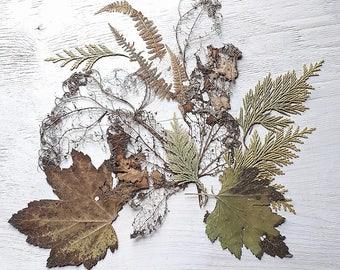 Pressed flower art print, floral print, botanical art print on canvas