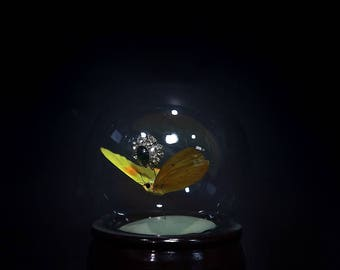 Yellow Butterfly  snow globe