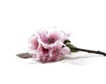Pink Floral Art Print, Nature Art, Minimalixt Still Life, Nature Garden Decor, Pastel Flower Bloom Print, Big Large Poster, Botanical Art