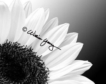 Sunflower in Black & White, Sunflower Photo, Sunflower Photography, Black and White Photography, Flower Photography, Black and White Flower